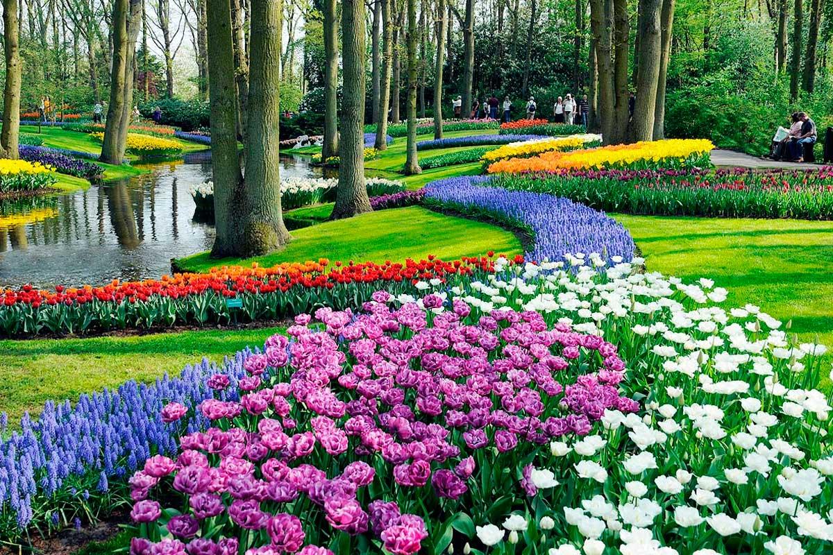 Implantação Reforma de Jardim