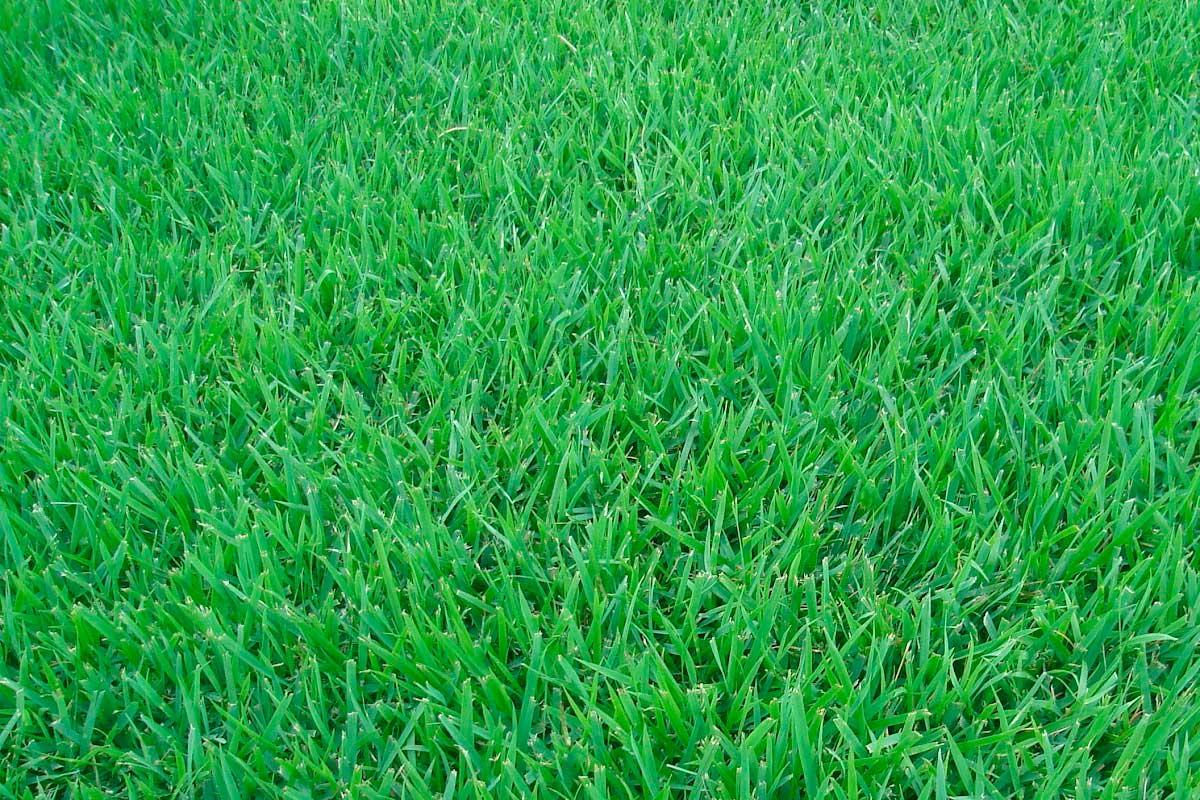 plantio de grama para jardim